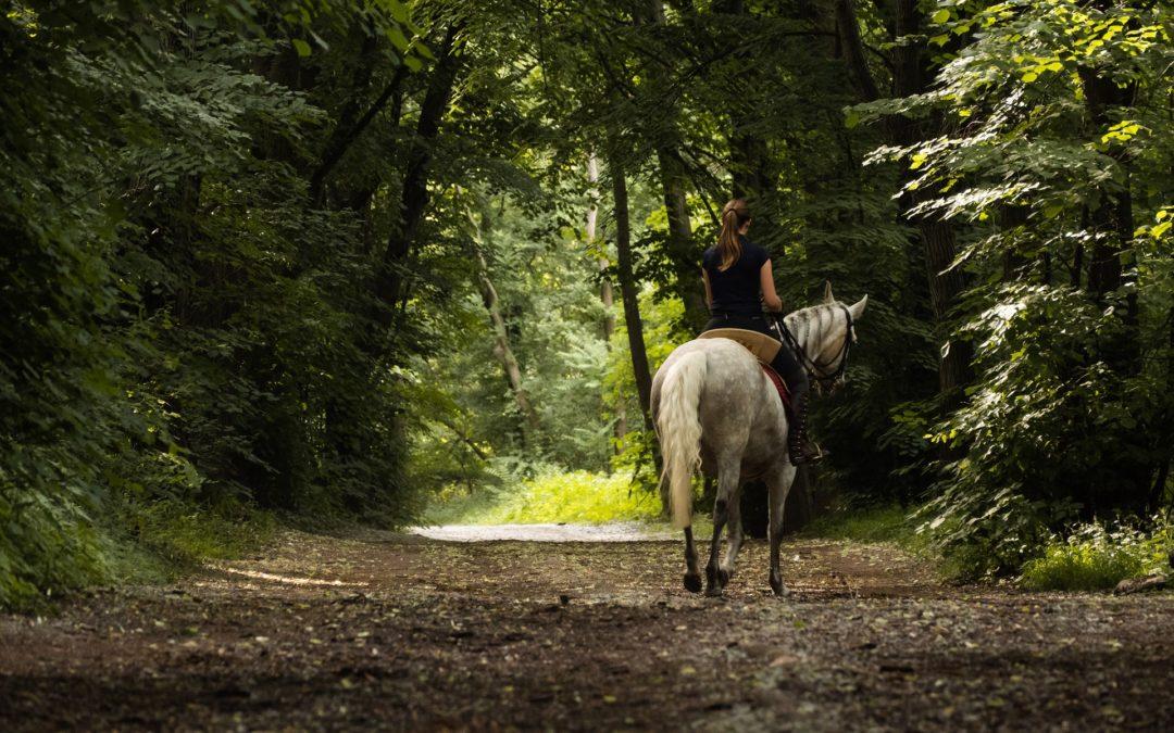 Anahata Equitation – Imagefilm-Dreh in Wien